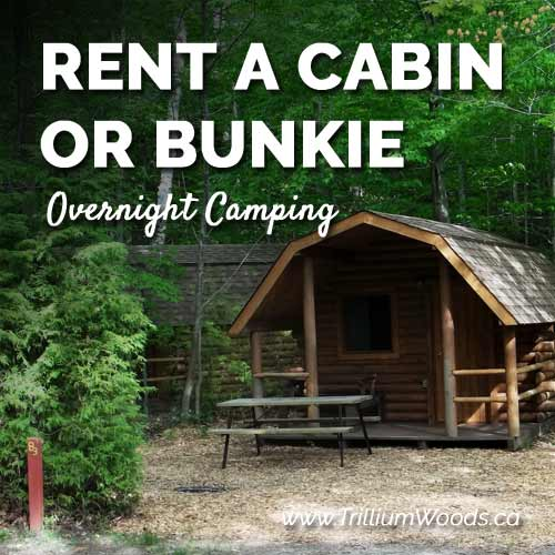 Rent a Cabin or Bunkie
