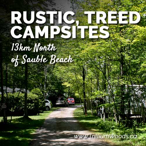 Rustic, Treed Sites